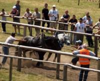 Konji vuku trupce-Bačke Oštarije