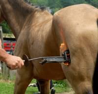 Žigosanje konja