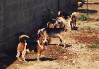 Indija - oslobođeni psi iz laboratorija