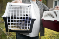 Swedish animal rights group Djurr�ttsalliansen rescued the 243 surviving chinchillas from the farm in Enk�ping, Sweden