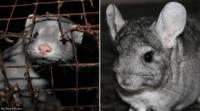 Životinje se ne mogu svesti na vrijednost njihova krzna!
