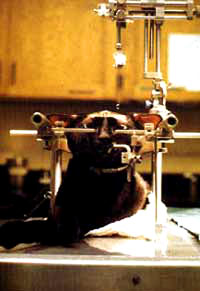 Vivisection 29 (cat) [ 31.41 Kb ]