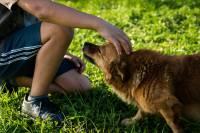Boy and a dog