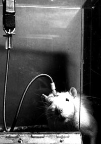 Vivisection 45 (mouse) [ 23.78 Kb ]