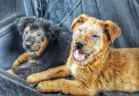 Dogs from Roma Settlements