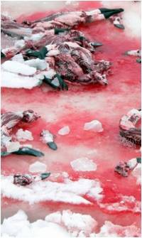 Dead seals on the ice floes [ 90.59 Kb ]