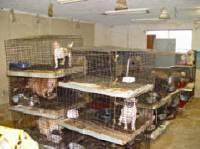 Source: www.puppymillprotest.org - puppy mill