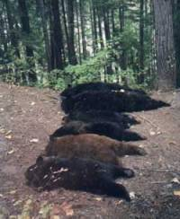 Six dead bears [ 56.22 Kb ]