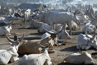Dinka cattle camp in Sudan