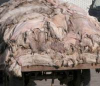 Chinese industry of dog fur 2 [ 103.90 Kb ]