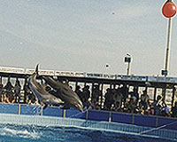 Helene O'Barry, the Cattolica Dolphinarium, Italy