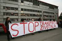 Protest against animal transport