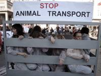 Demo against animal transport 2009. [ 411.74 Kb ]
