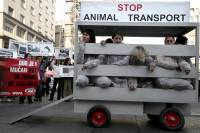 Demo against animal transport 2009. [ 468.19 Kb ]
