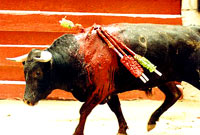 Bull-fighting and Fiesta -06 [ 25.25 Kb ]