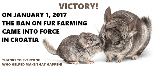 Victory for chincillas!