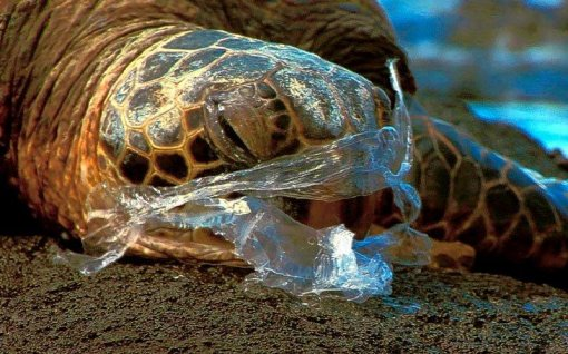 turtle in a plastic bag [ 106.18 Kb ]