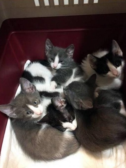 Abandoned kittens - organization SOS CAT