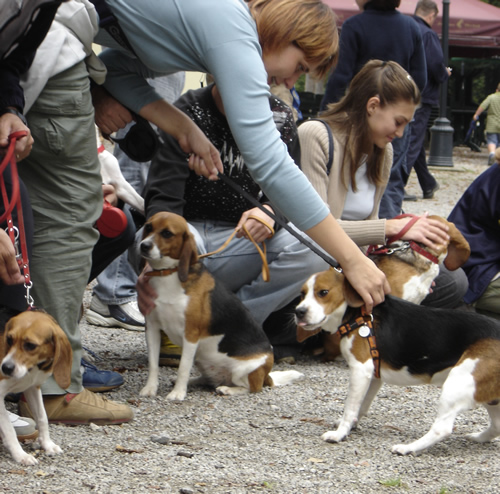 Reunion of the beagles 4
