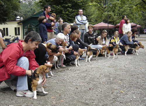 Reunion of the beagles 5