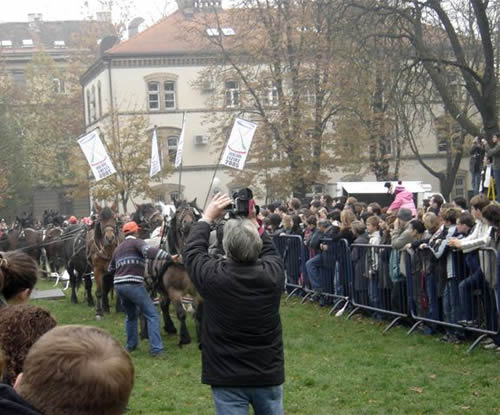 Zagreb - experiments with horses 1