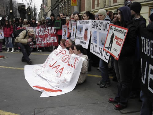 'Bleeding' Activists for the Bleeding Seal Pups 4
