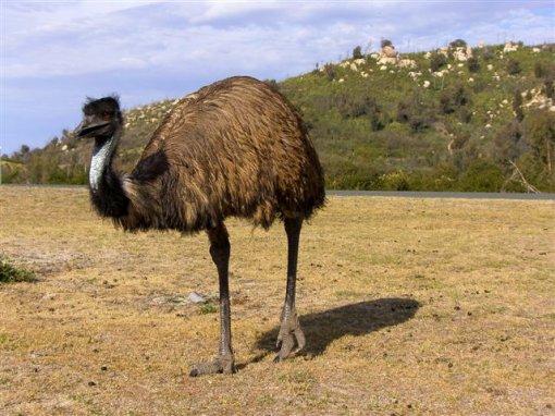 Prijatelji životinja - Divlje životinje Australije
