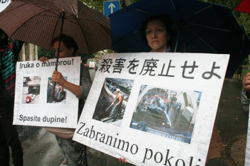 Protest against dolphin killing [ 497.35 Kb ]
