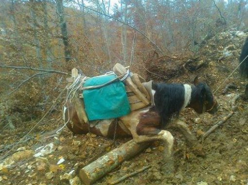 Abused horses - Velebit, Gracac 2