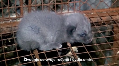 Czech Republic against fur [ 119.68 Kb ]